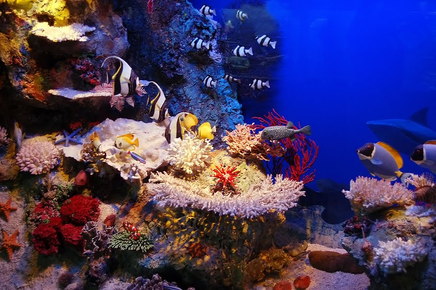 Fiji - podmořský život