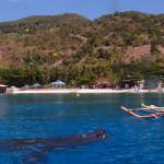 Filipíny - krmení velrybích žraloků