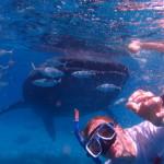 Filipíny - velrybí žralok ve společnosti Jitky