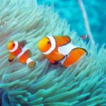 Maledivy-Bandos-šnorchlování