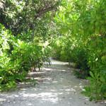 Maledivy-Bandos-vnitrozemí