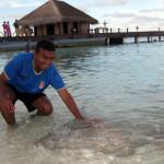 Maledivy-Vivanta-by-Taj-krmení-rejnoků