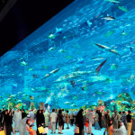 Emiráty-Dubaj-Dubai-Mall-akvárium