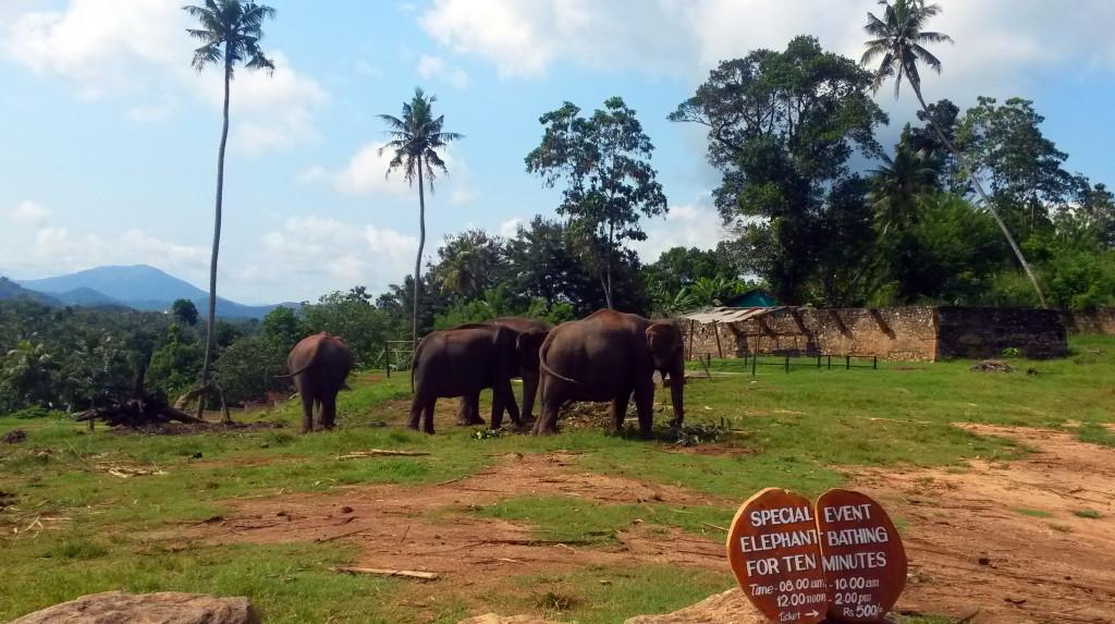 Srí-Lanka-Pinnawela-sloní-sirotčinec