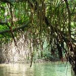 Srí-Lanka-projížďka-lodí-mangrovníky
