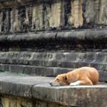 Srí-Lanka-Polonnaruwa-ruiny-chrámu-Shiva