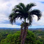 Filipíny-Bohol-Čokoládové-horyry