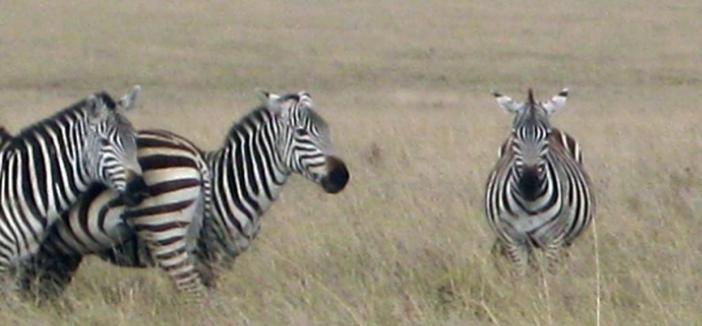 Luxusni-Safari-Afrika-Tanzanie-Seregneti