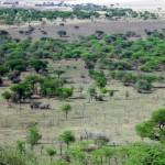 Luxusní-safari-Afrika-Tanzánie-Serengeti