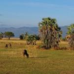 Luxusní-safari-Afrika-Tanzánie-Tarangire-Maramboi-Tented-Camp