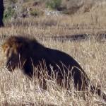 Luxusní-safari-Afrika-Tanzánie-Tarangire
