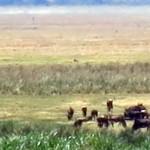 Luxusní-safari-Afrika-Tanzánie-kráter-Ngorongoro