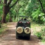 Luxusní-safari-Afrika-Tanzánie-národní-rezervace-Lake-Manyara
