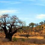 Luxusní-safari-Afrika-Tanzánie - Tarangire -piknik
