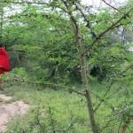 Luxusní-safari-Tanzanie-Zanzibar-Selous-African-Safari-Camp-pěší-procházka-Akácie