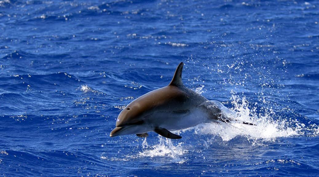 Madeira-Scorpio-Madeira-pozorovani-velryb a delfinu-banner