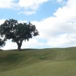 Golf-Španělsko-La-Cala-Golf-golfové-hřiště-EuropaGolf-Španělsko-La-Cala-Golf-golfové-hřiště-Europa