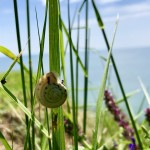 Golf-Bulharsko-Thracian-Cliffs-soutěž-o-foto-šneka