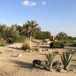 Golfové hřiště Abu Dhabi