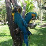Bali Ubud-Ptaci-park