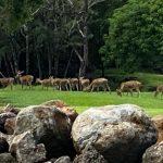 Golf-Mauricius-Constance-Belle-Mare-Plage