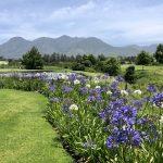 golfové-hřištěgolfové-hřiště-Fancourt-Montagu-Fancourt-Montagu