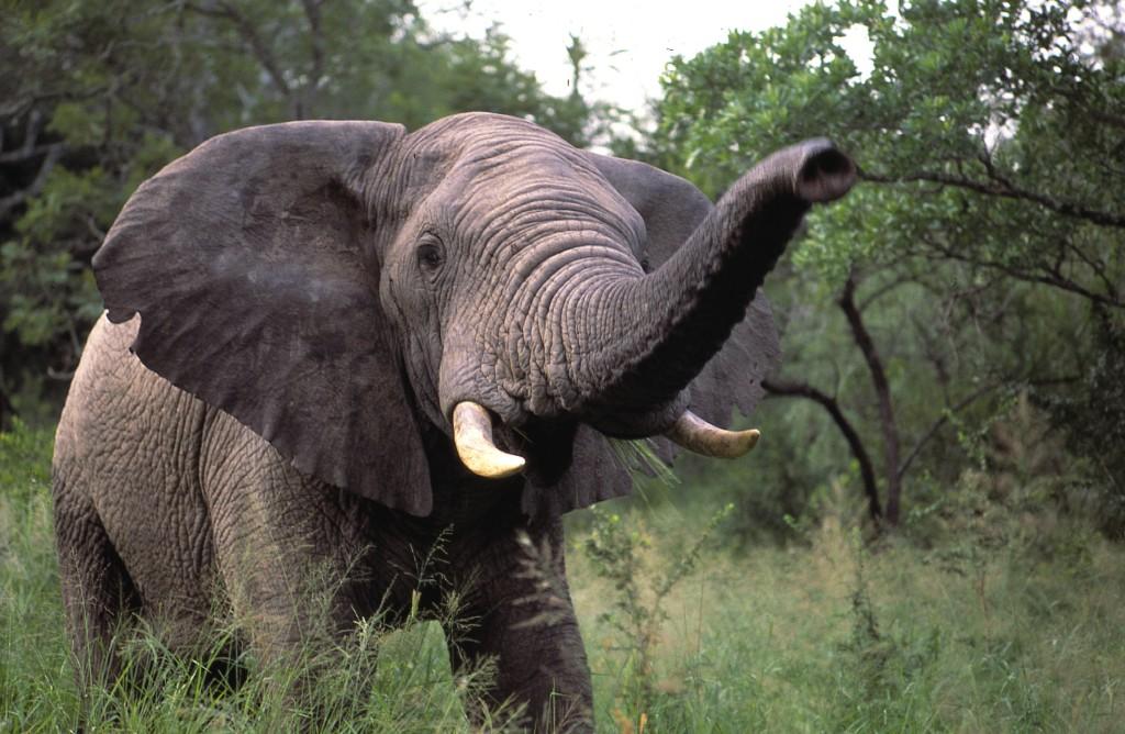 Tanzánie - velká pětka - slon