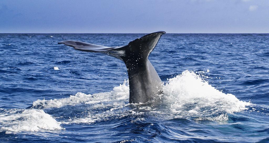 Azory - velryby