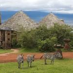 Tanzánie - Ngorongoro Crater Lodge - zebry