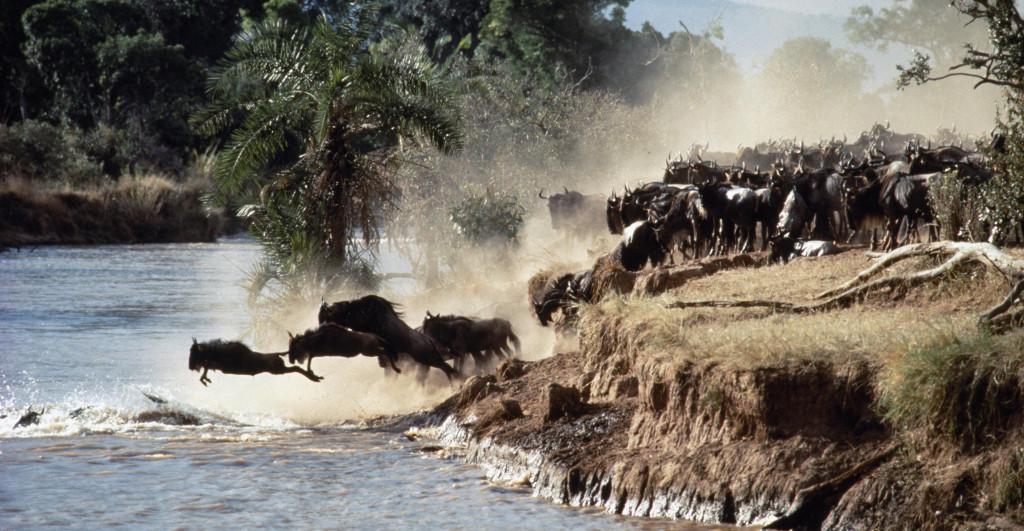 Tanzánie - migrace pakoňů