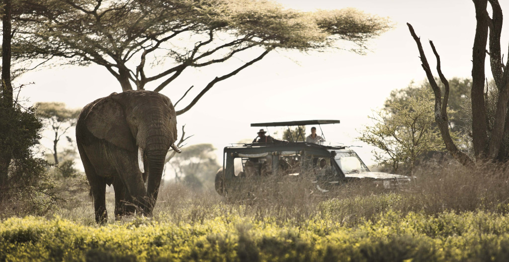 Tanzánie - safari