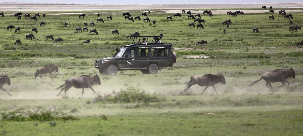 Tanzánie - kráter Ngorongoro - safari