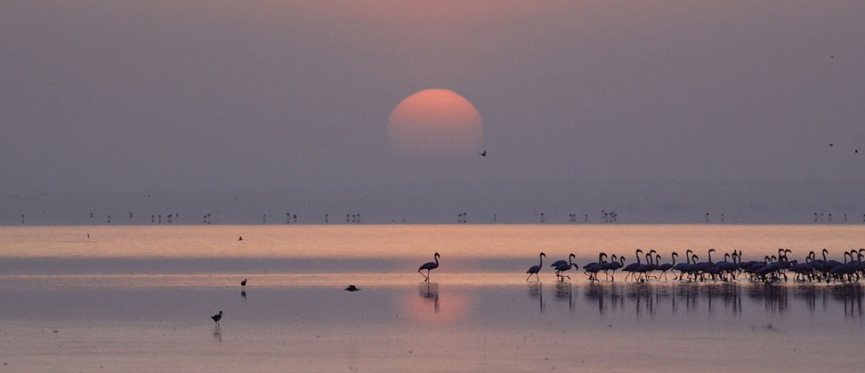 Tanzánie - Lake Manyara - plameňáci