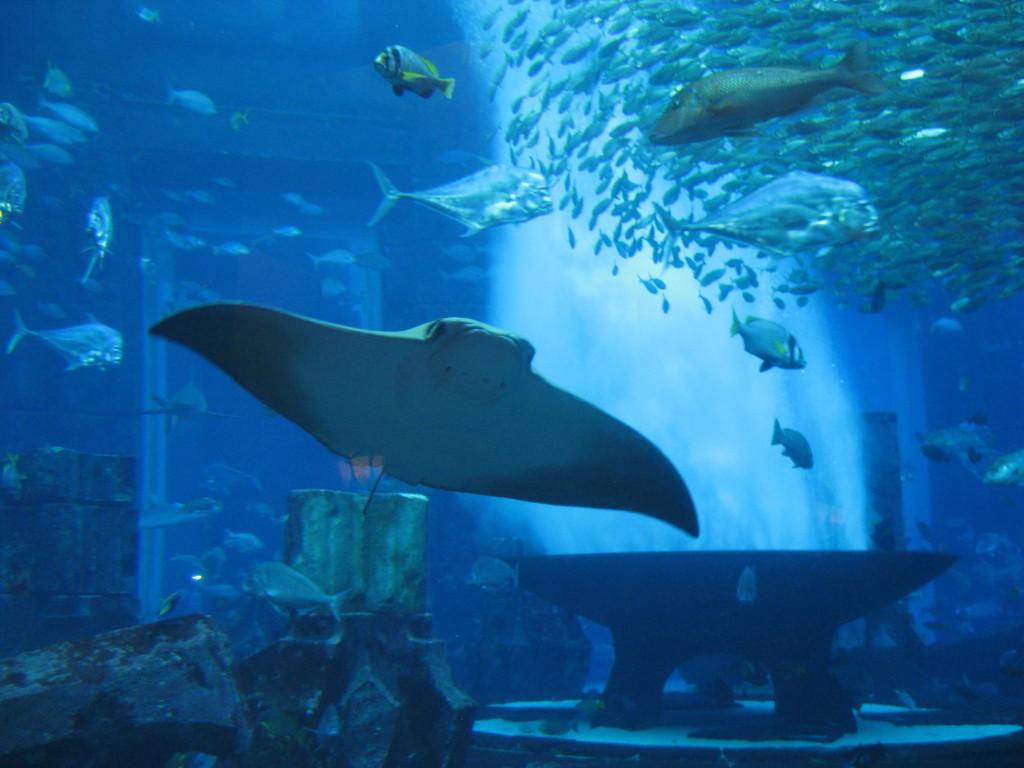 Dubaj - palmový ostrov - hotel Atlantis The Palm - akvárium