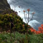 Azory - Pico - dramatické útesy s divokou květenou