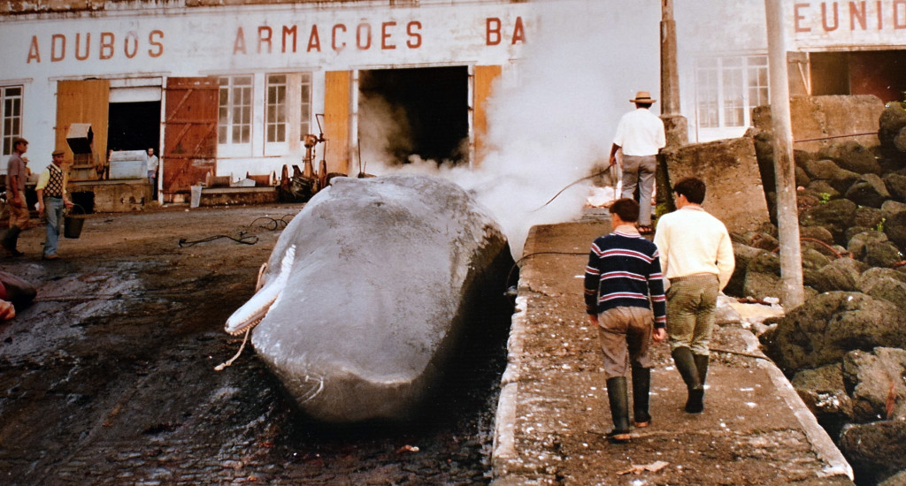 Azory - Pico - muzeum velrybářství - historické fotografie
