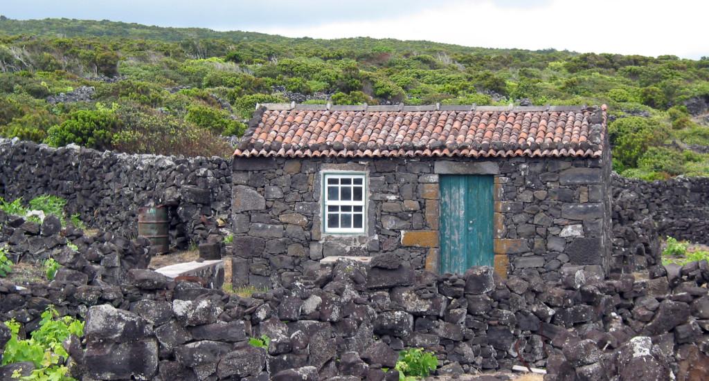 Azory - Pico - vinice mezi lávou