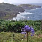 Azory - ostrov Sao Miguel - květina lásky Agapantos
