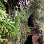 Madeira-Queimadas-levada-Caldeirao-VerdeMadeira-Queimadas-levada-Caldeirao-Verde