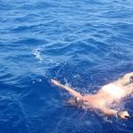 Madeira-Scorpio-Madeira-pozorování-velryb a delfínů