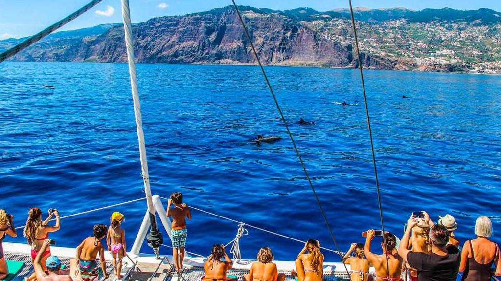 Madeira-katamarán-pozorování-velryb a delfínů