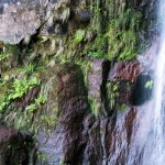 Madeira-levada-Risco-a-25-pramenů