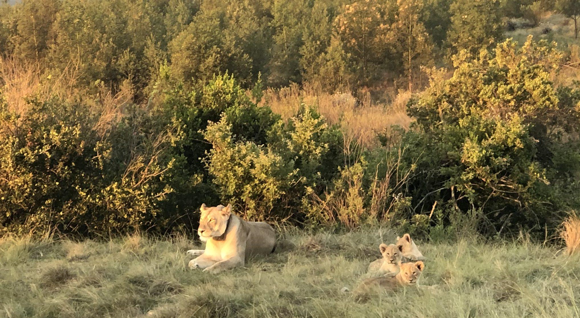 JAR-safari-Gondwana
